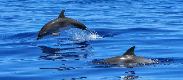 delfini Porto Pino